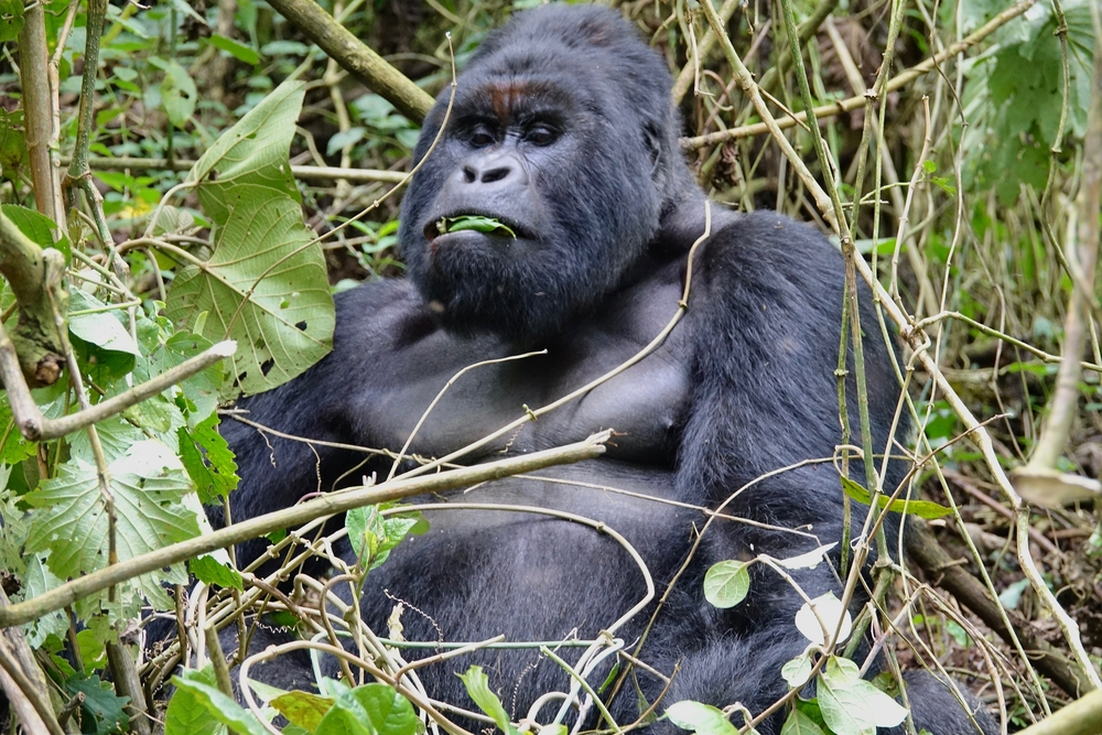 10. The Congo Basin