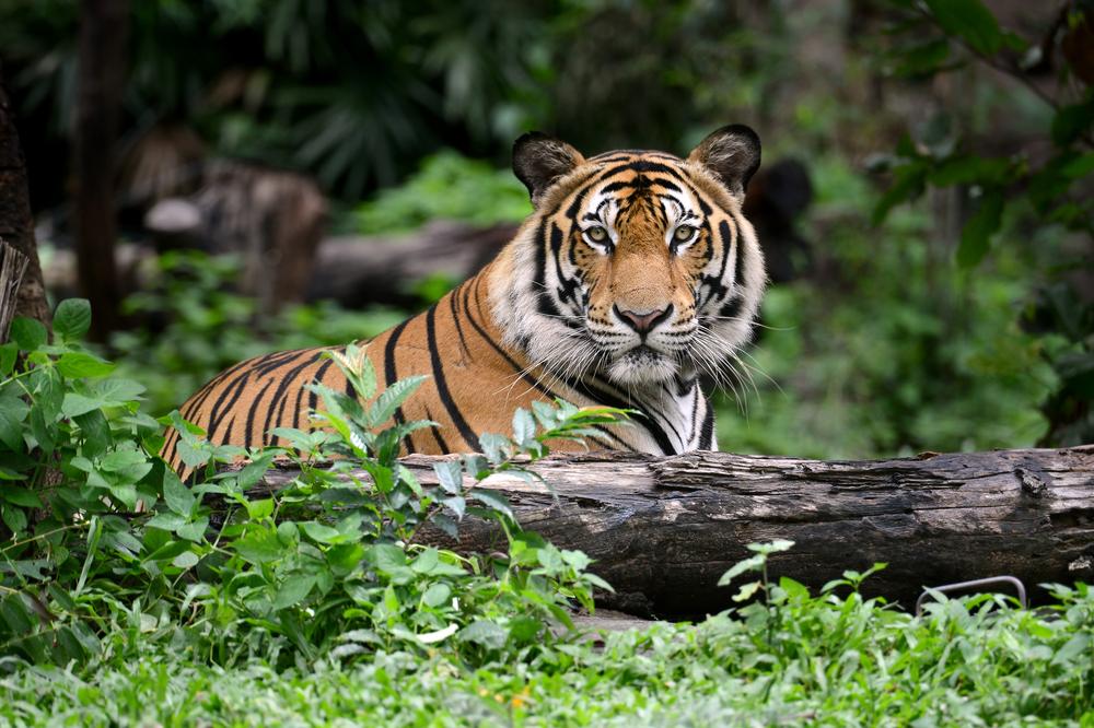 16. The Sundarbans