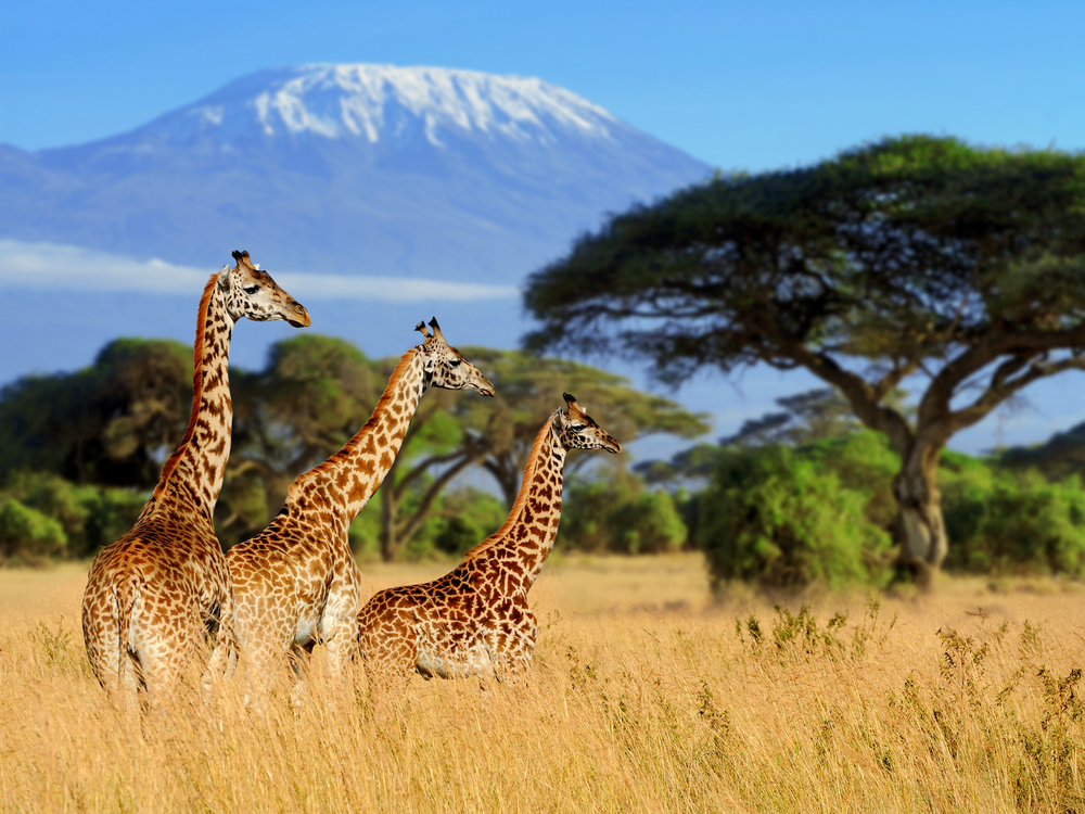 2. The Snows Of Kilimanjaro